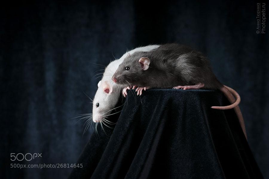 Photograph **** by Anna Tyurina on 500px