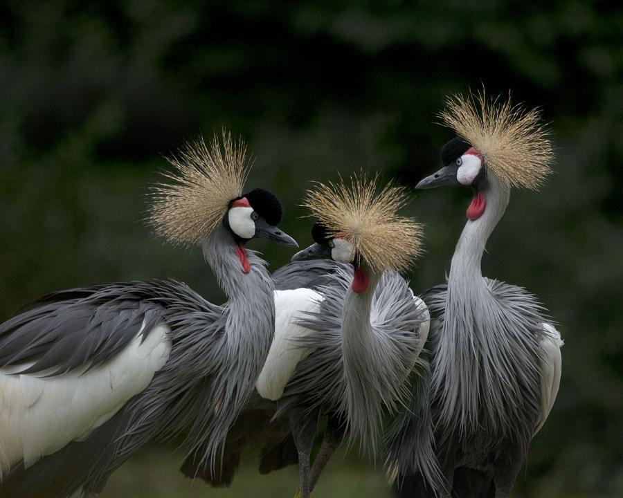 Three cranes by Andre Villeneuve on 500px.com