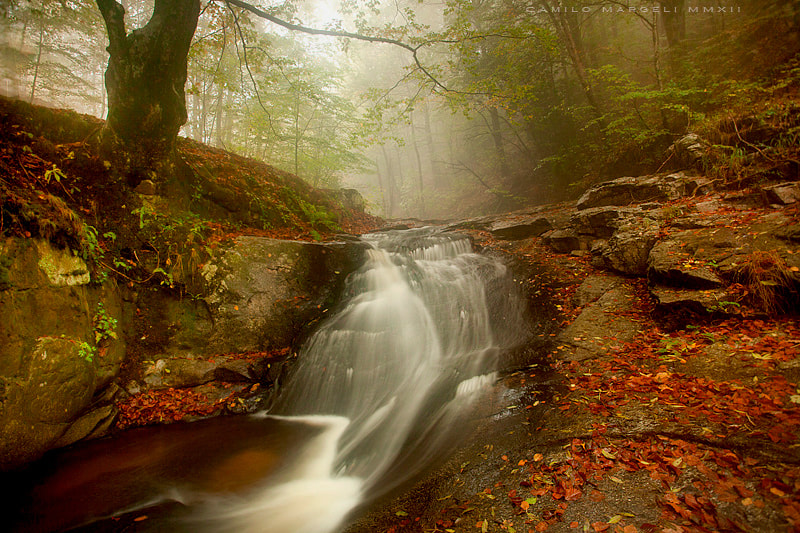 Photograph Montseny by Camilo Margelí on 500px