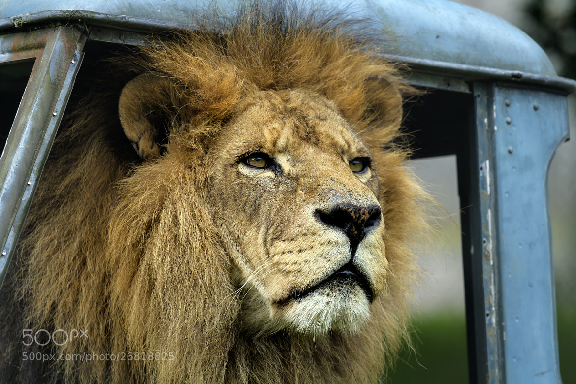 Photograph king in car by Kelvin Rumsby on 500px