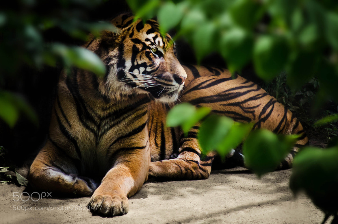 Photograph Vigilant by Justin Lo on 500px