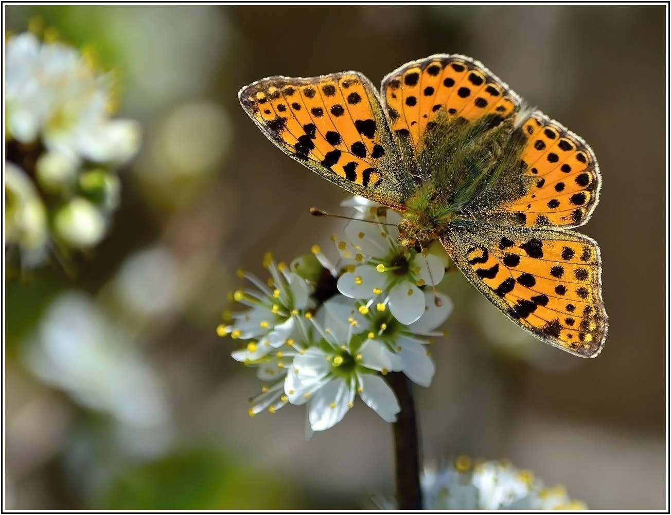 Photograph Rock Butterfly by Ferenc Gelencsér on 500px