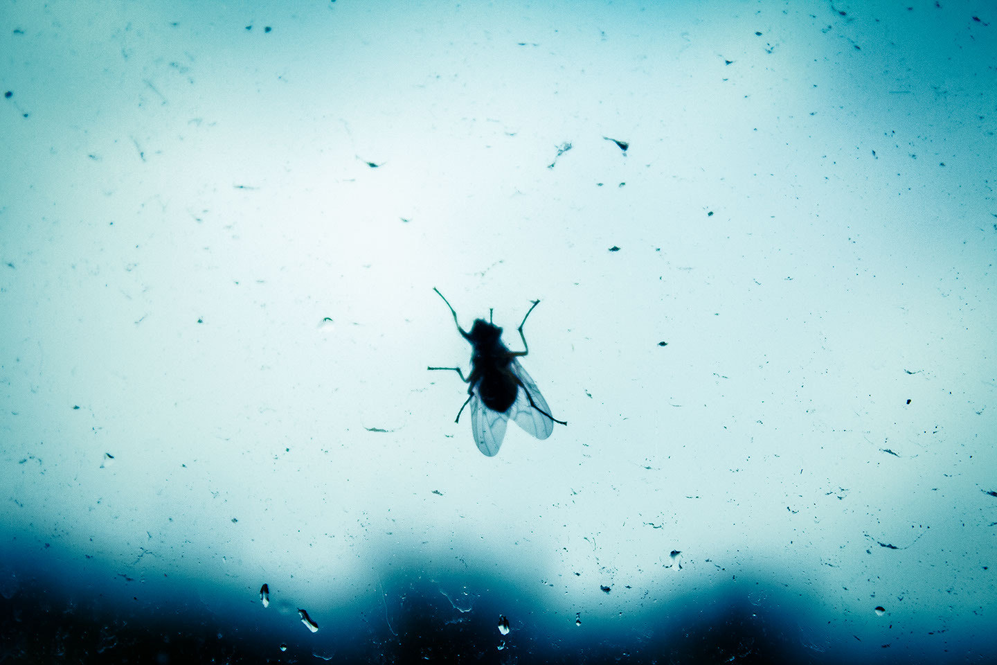 Photograph Fly in the rain by Denys Shyrokov on 500px