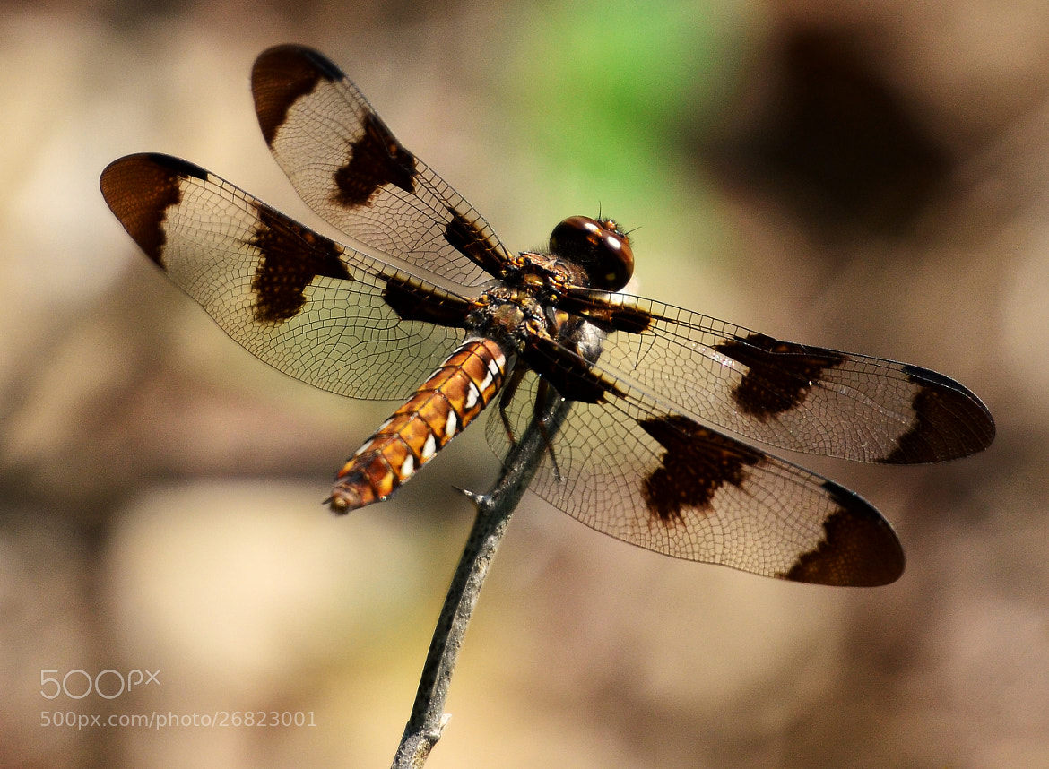 Photograph Transparent Wings by Jeff Clow on 500px