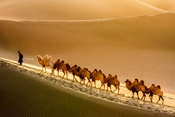 Photograph Desert Traveller by Feng Wei on 500px