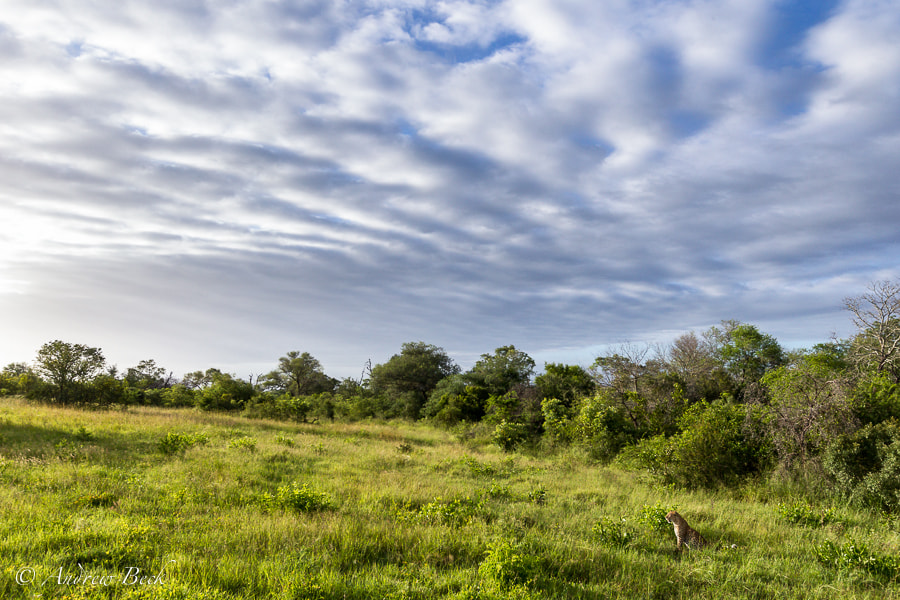 Photograph Under an African Sky by Andrew Beck on 500px