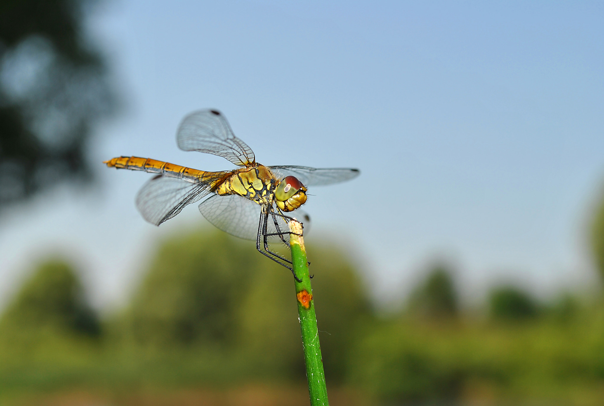 Photograph dragonfly by Tatiana Borisenko on 500px