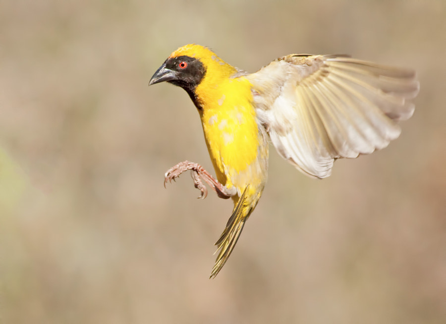 Incoming by Neil Roux on 500px.com