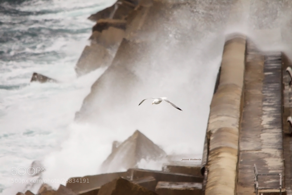 Photograph Without fear of waves by Josune Etxebarria on 500px