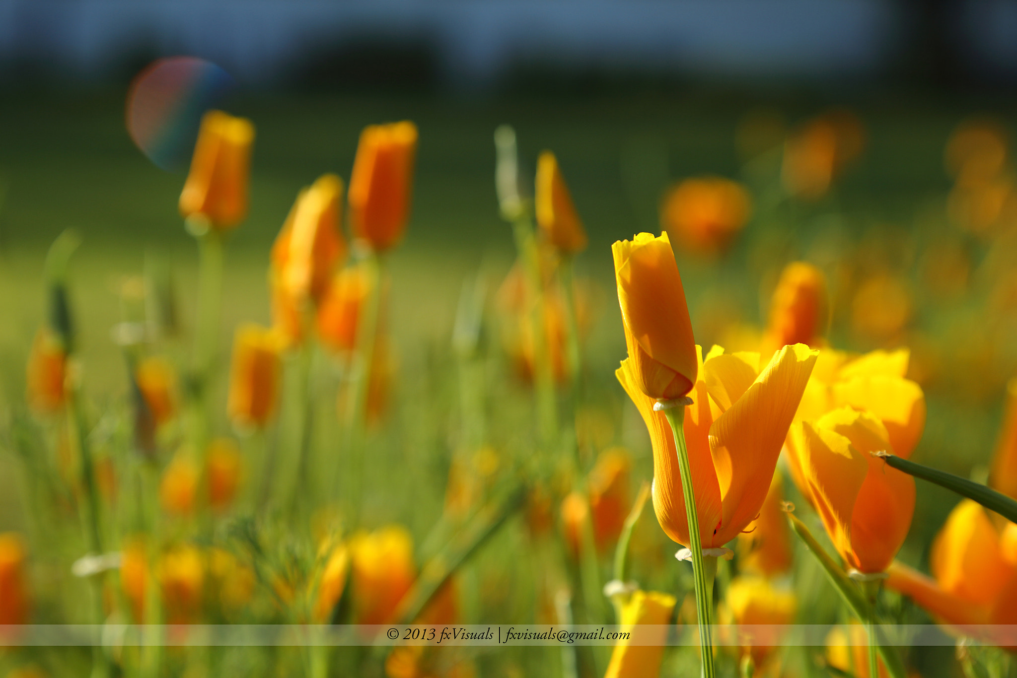 Photograph Morning Glow by Dilip Singh on 500px