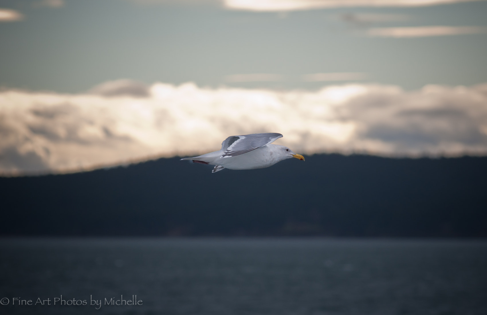 Photograph Flying Along the Horizon  by Michelle Stevenson on 500px