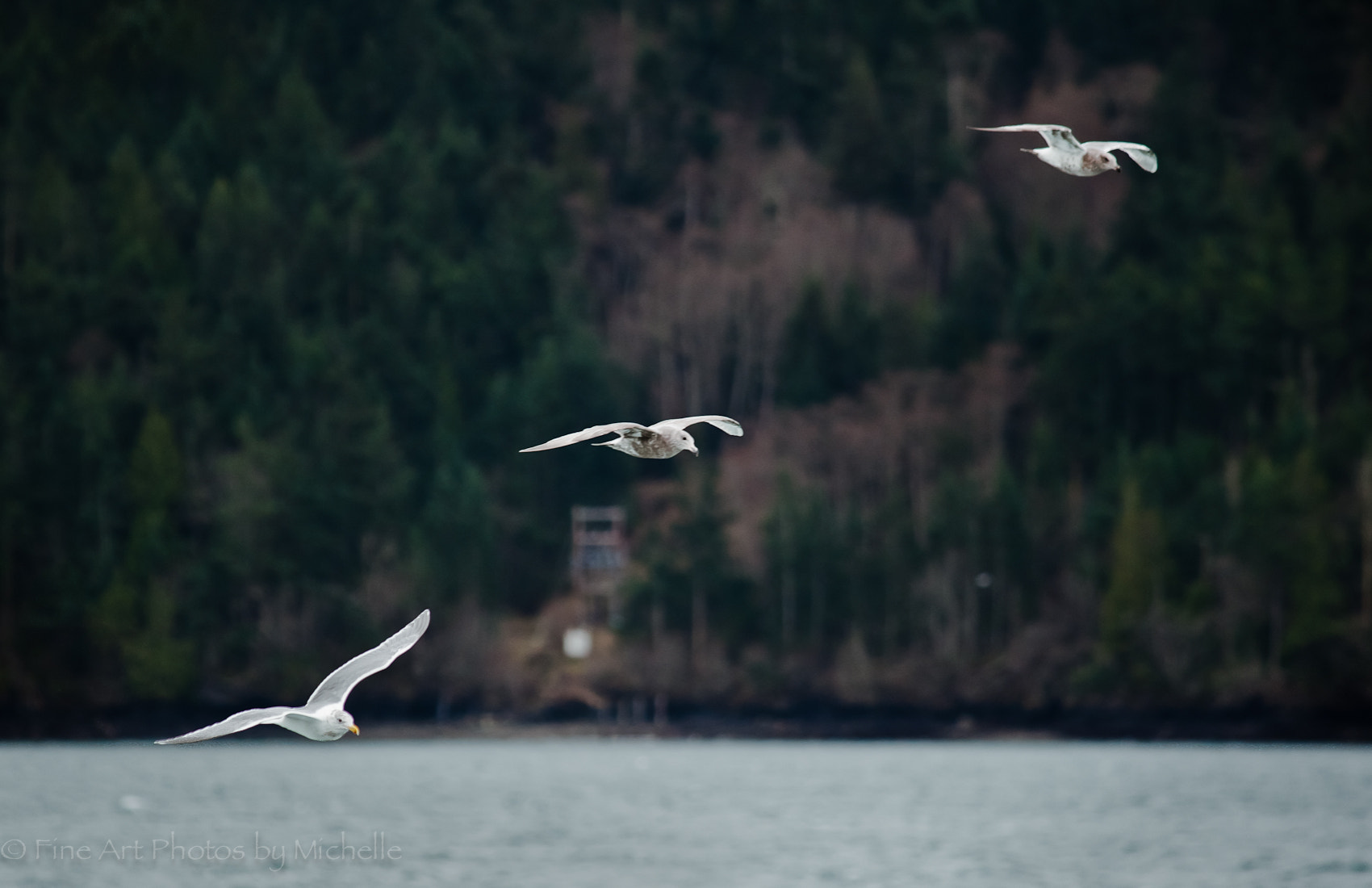 Photograph Flock of Seagulls by Michelle Stevenson on 500px