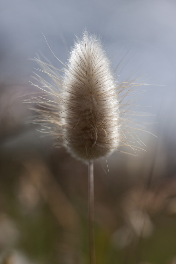 A poil long (Long-haired) de Christine Druesne sur 500px.com