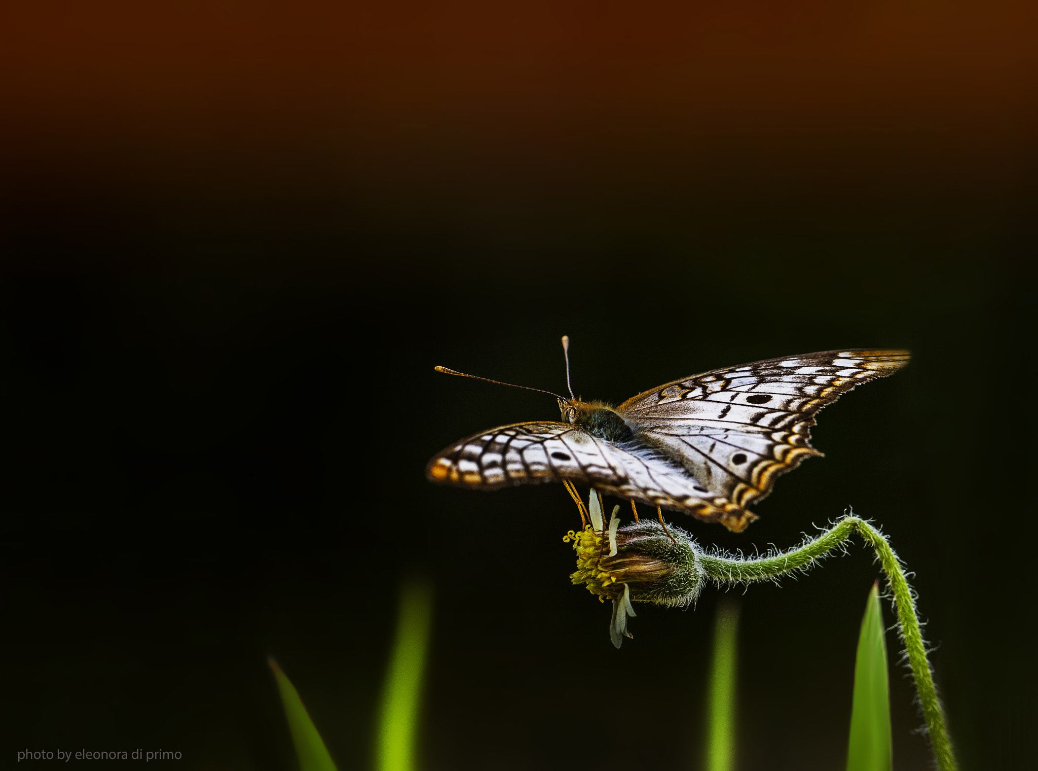 Photograph Flying Mind by Eleonora Di Primo on 500px