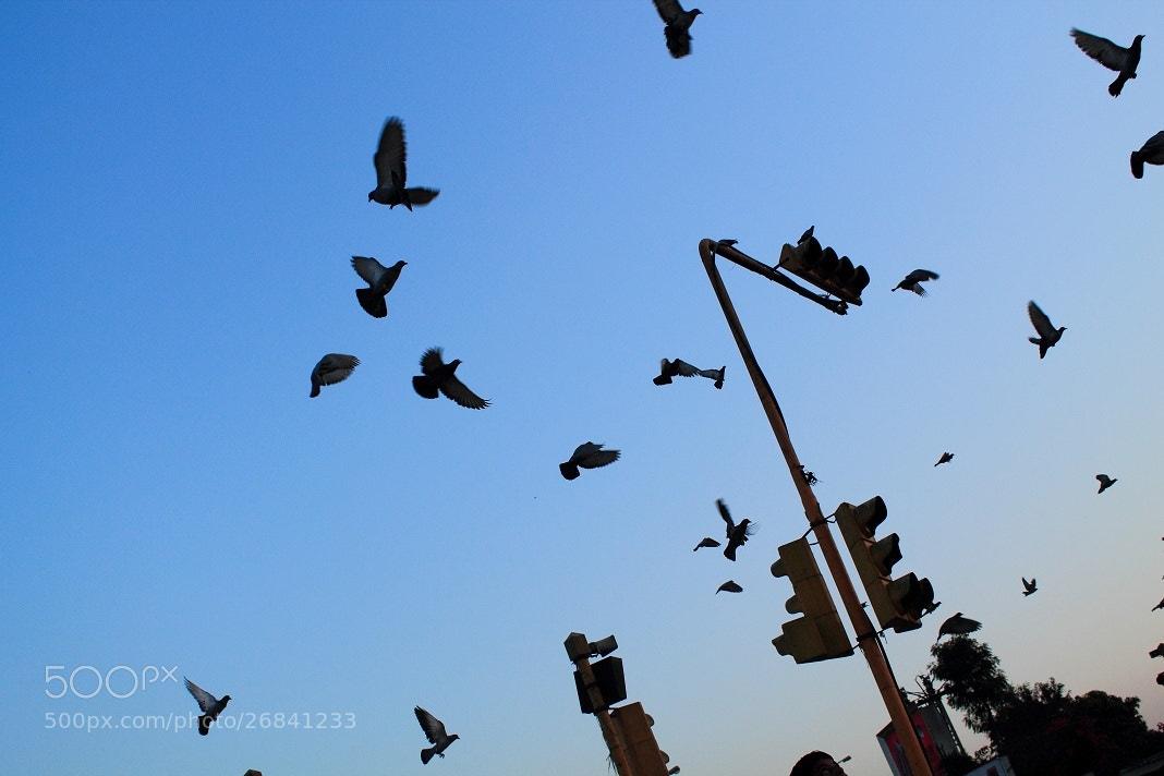 Photograph fly high by salman arif on 500px
