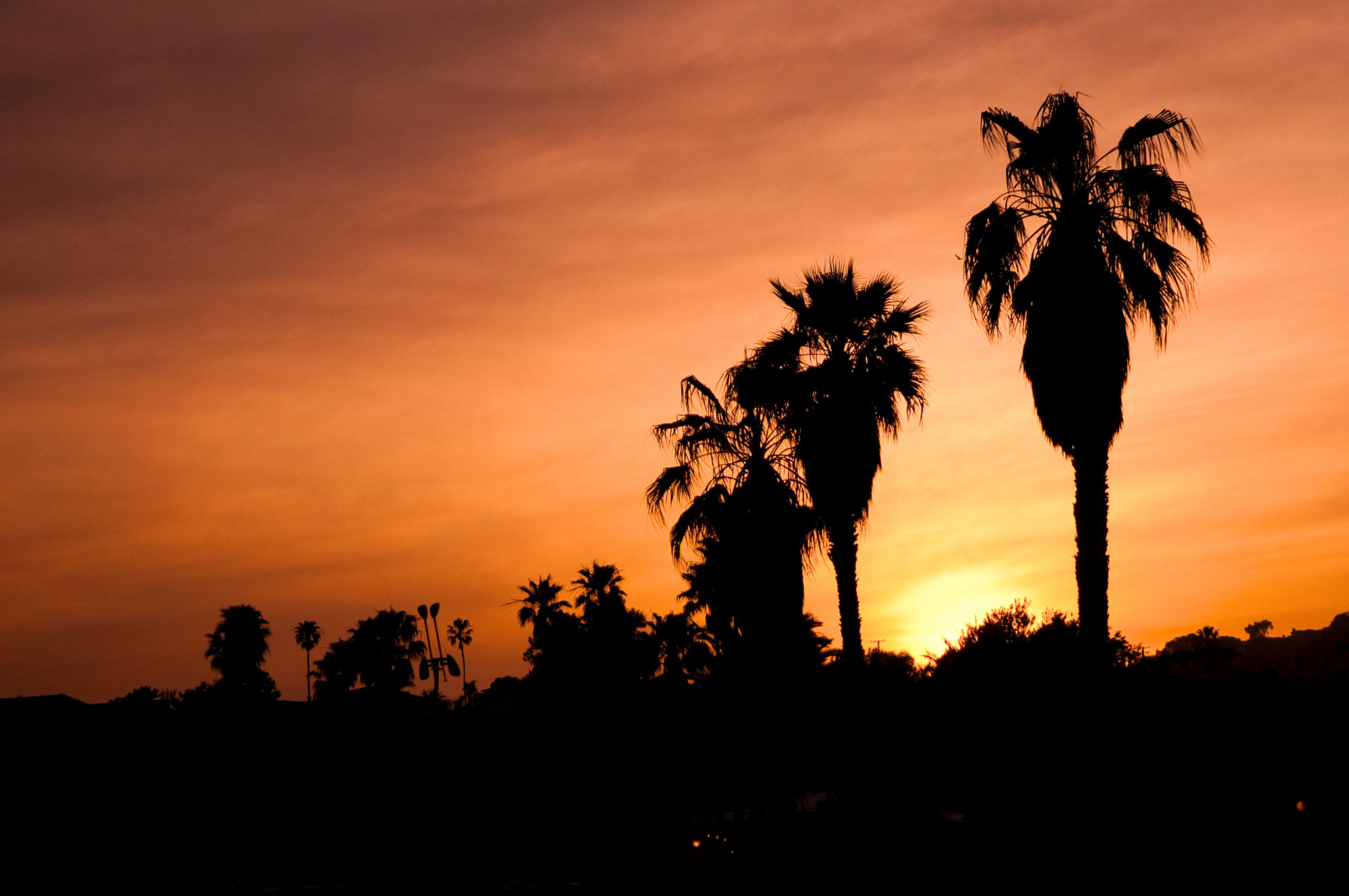 Photograph Palm Trees in the Sun by Karl Johnson on 500px