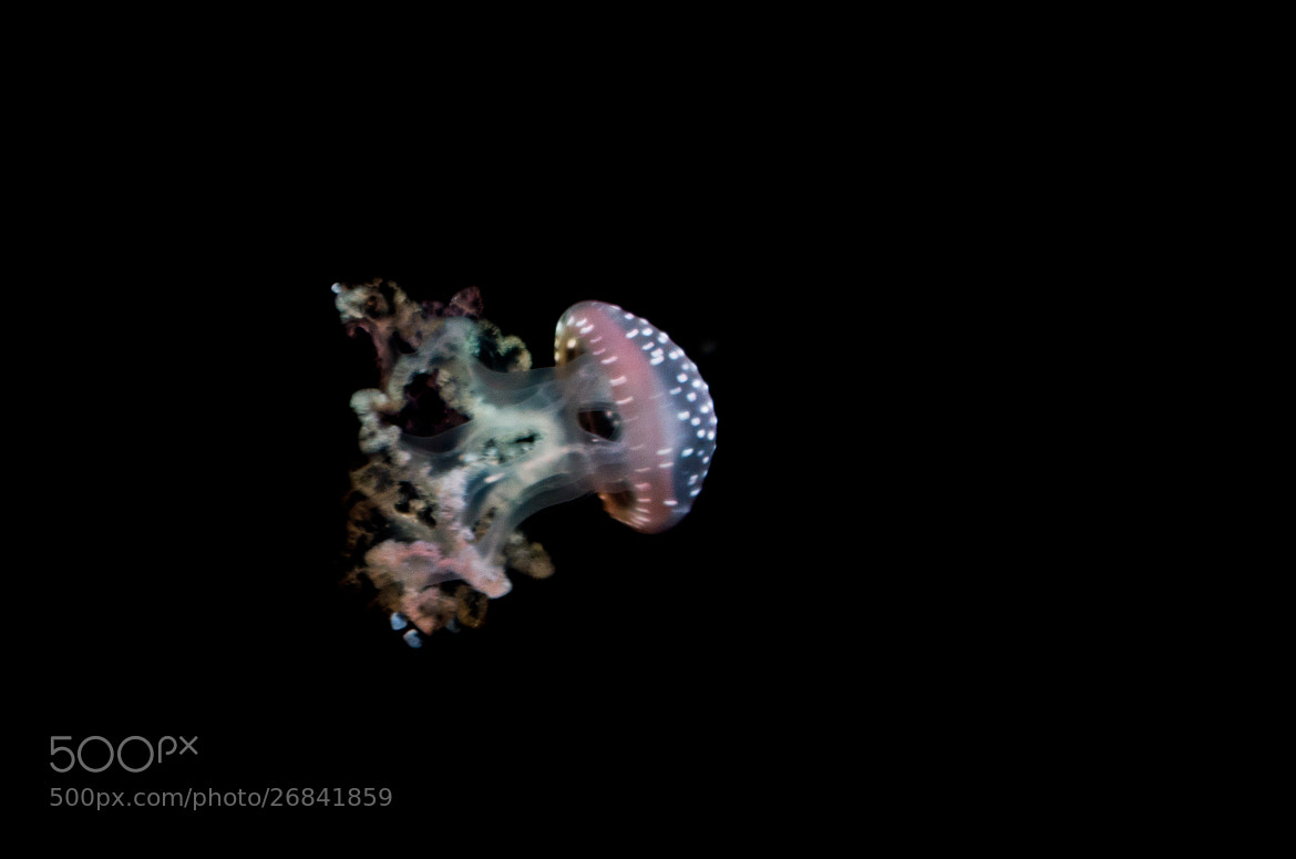 Photograph Jellyfish 2 by Christian Olivares on 500px