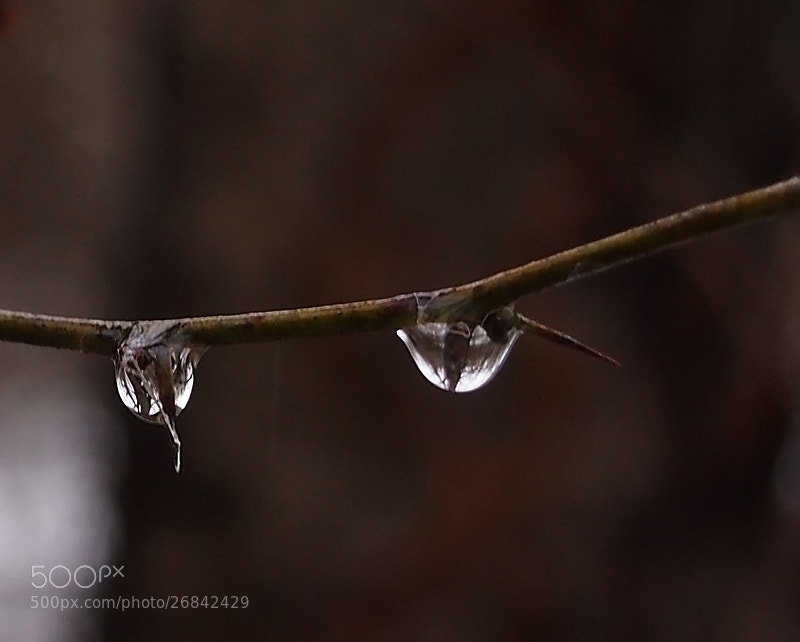 Photograph Drops by Tsvetanka Kirilova Georgieva on 500px