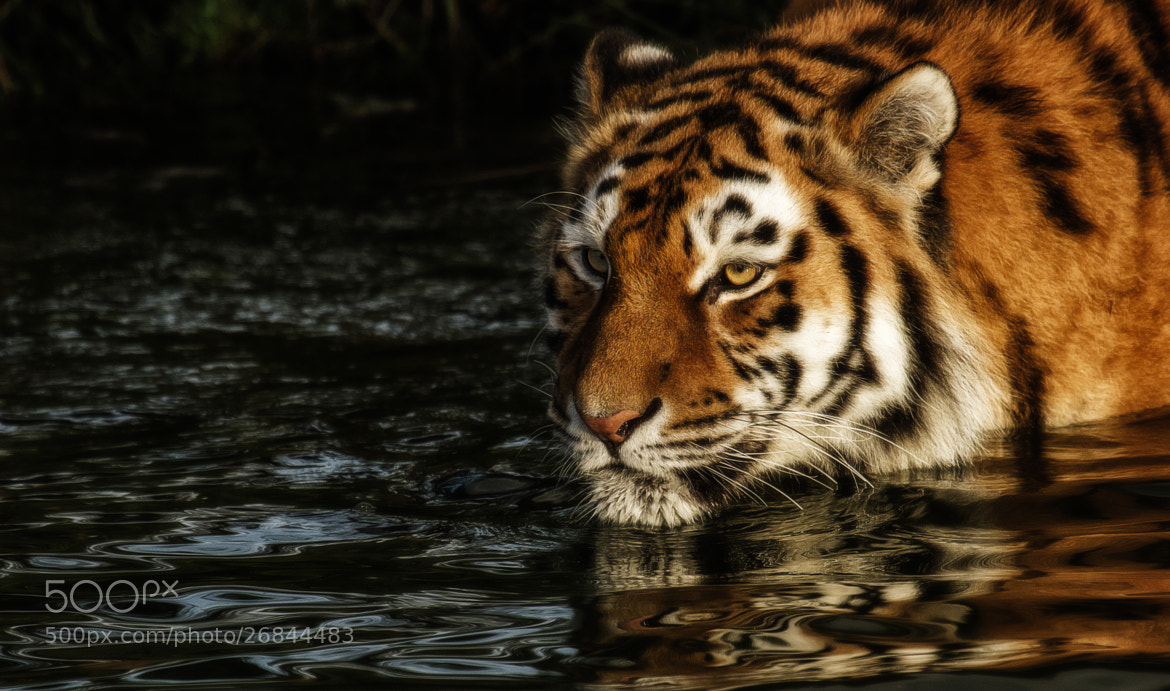 Photograph Taking a Bad by Denis Van Linden on 500px