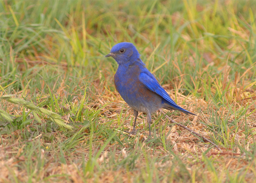 Photograph Blue Bird. by Luis Jaime Leal on 500px
