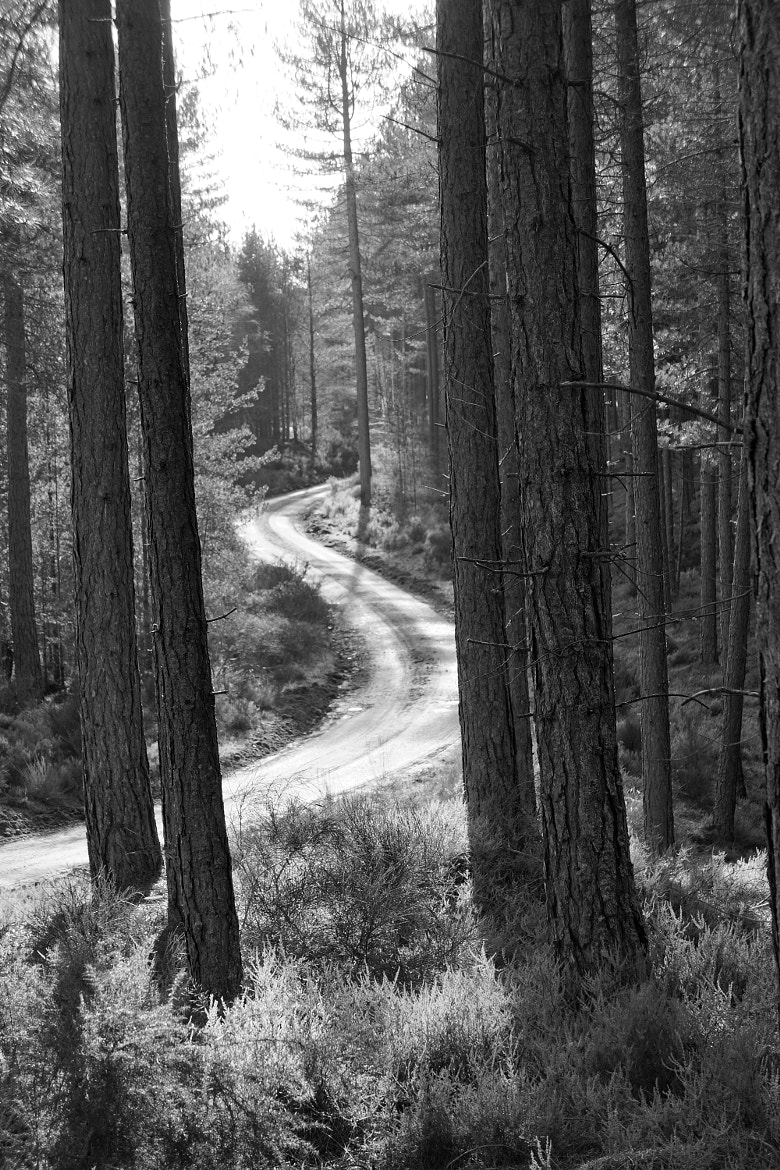 Photograph Forest Track. by Neil Hargreaves on 500px
