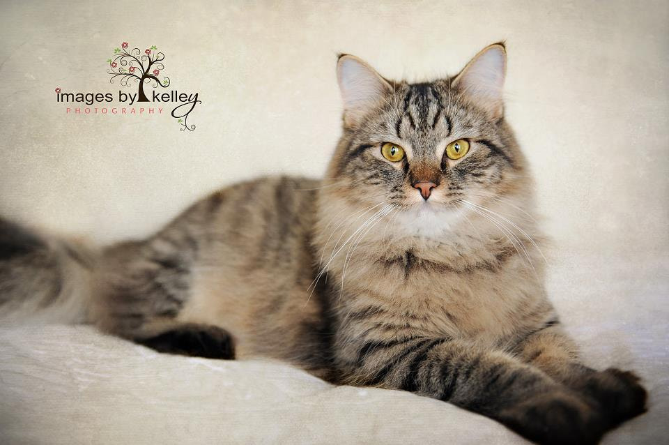 Photograph Tucker....my 2nd heart-cat by Kelley Nelson on 500px