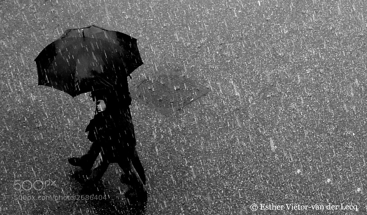 Photograph Rain by Esther van der Lecq on 500px