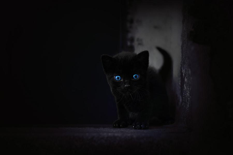 Black Panther, автор — Tarik HZ на 500px.com
