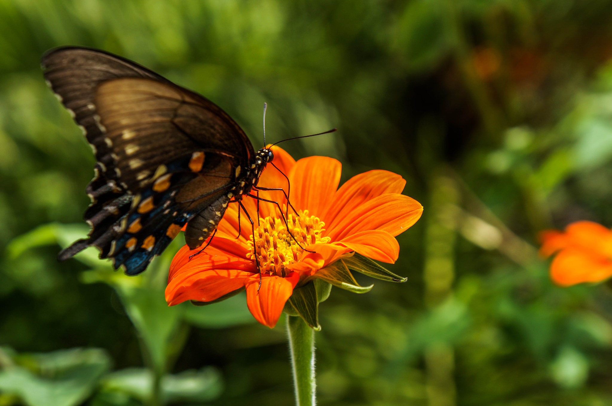 Photograph Flutter by Alyssa Paraggio on 500px