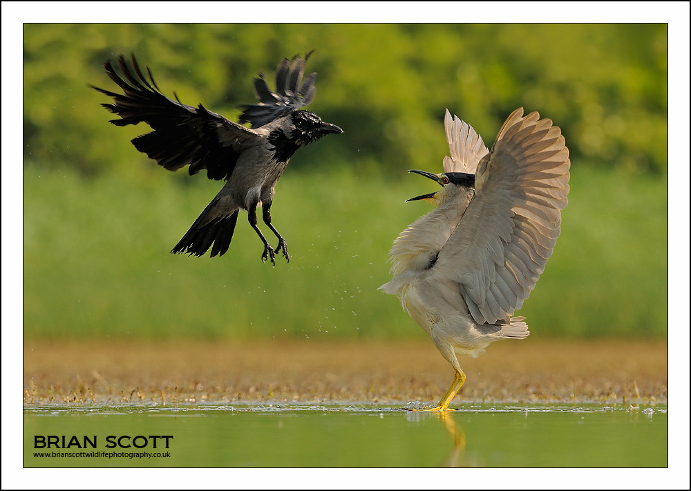 Photograph The Stand Off by Brian Scott on 500px