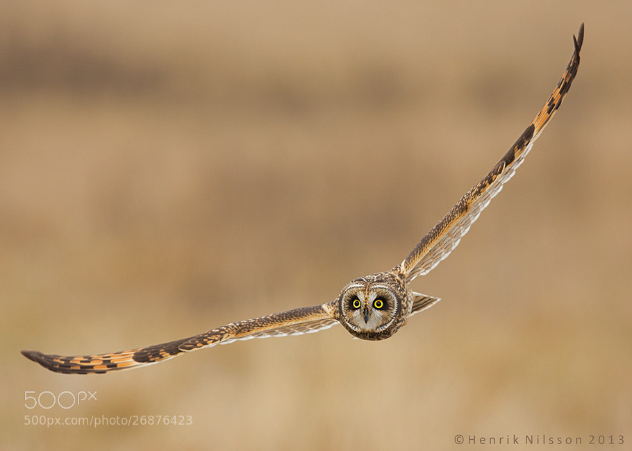 Photograph Glider by Henrik Nilsson on 500px