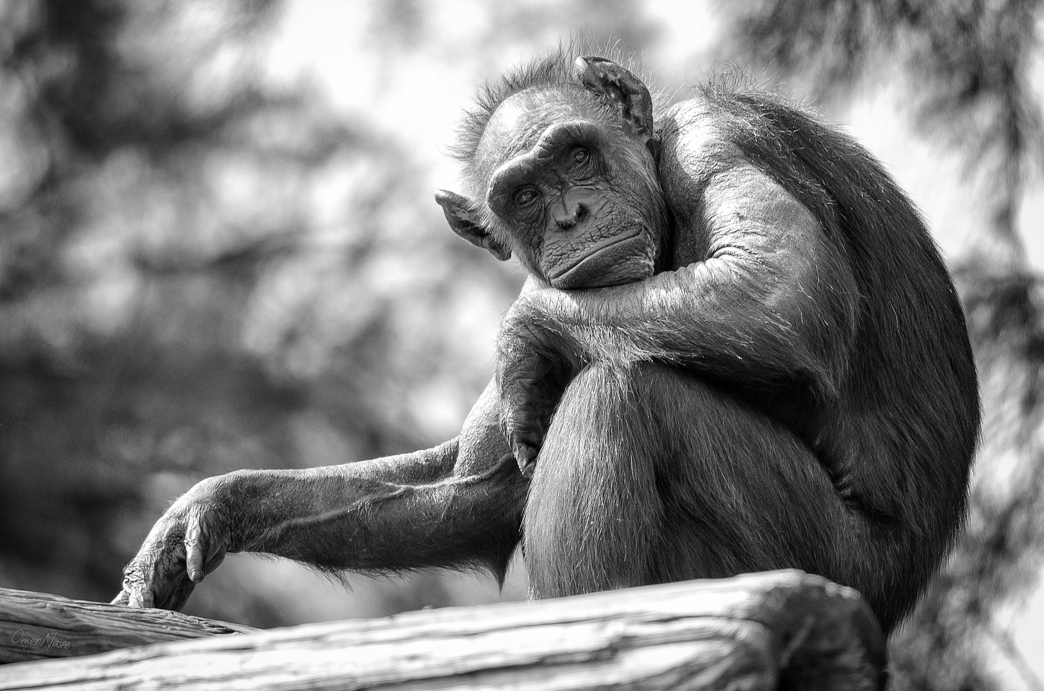Photograph The Thinker by Omer Nave on 500px