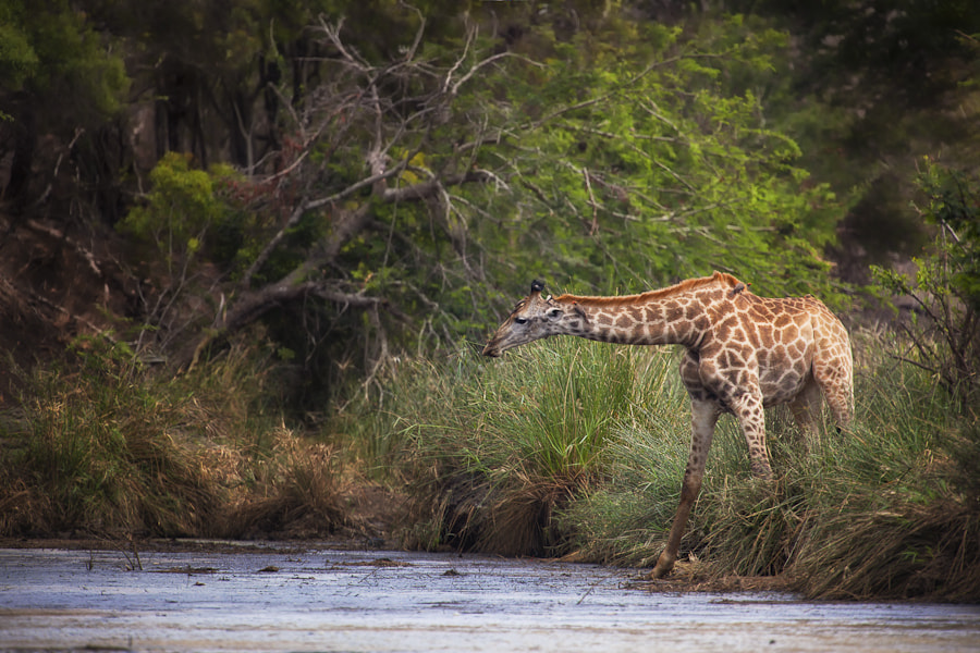 Photograph Kruger Habitat by Mario Moreno on 500px