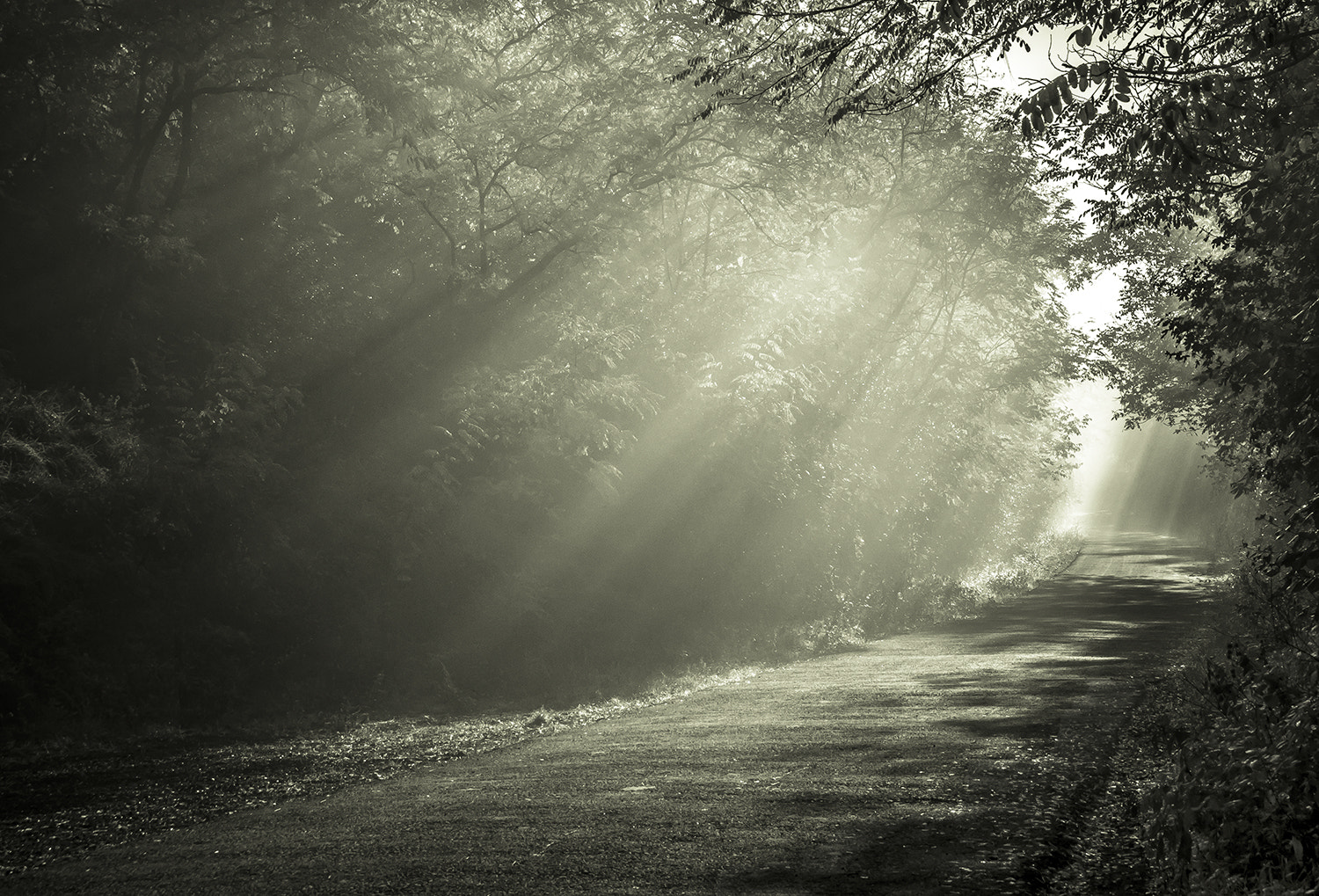 Photograph light curtain by Andy 58 on 500px