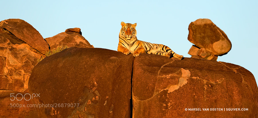 Photograph His Royal Highness by Marsel van Oosten on 500px