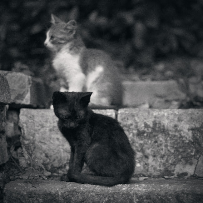 Photograph Two Street Cats by Mikael Kapanaga on 500px