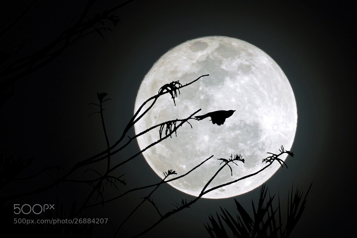 Photograph Night Flight (Republished) by Ahmed Waheed on 500px