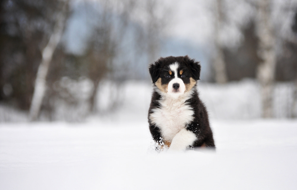 Photograph Sweet puppy by Anne Geier on 500px