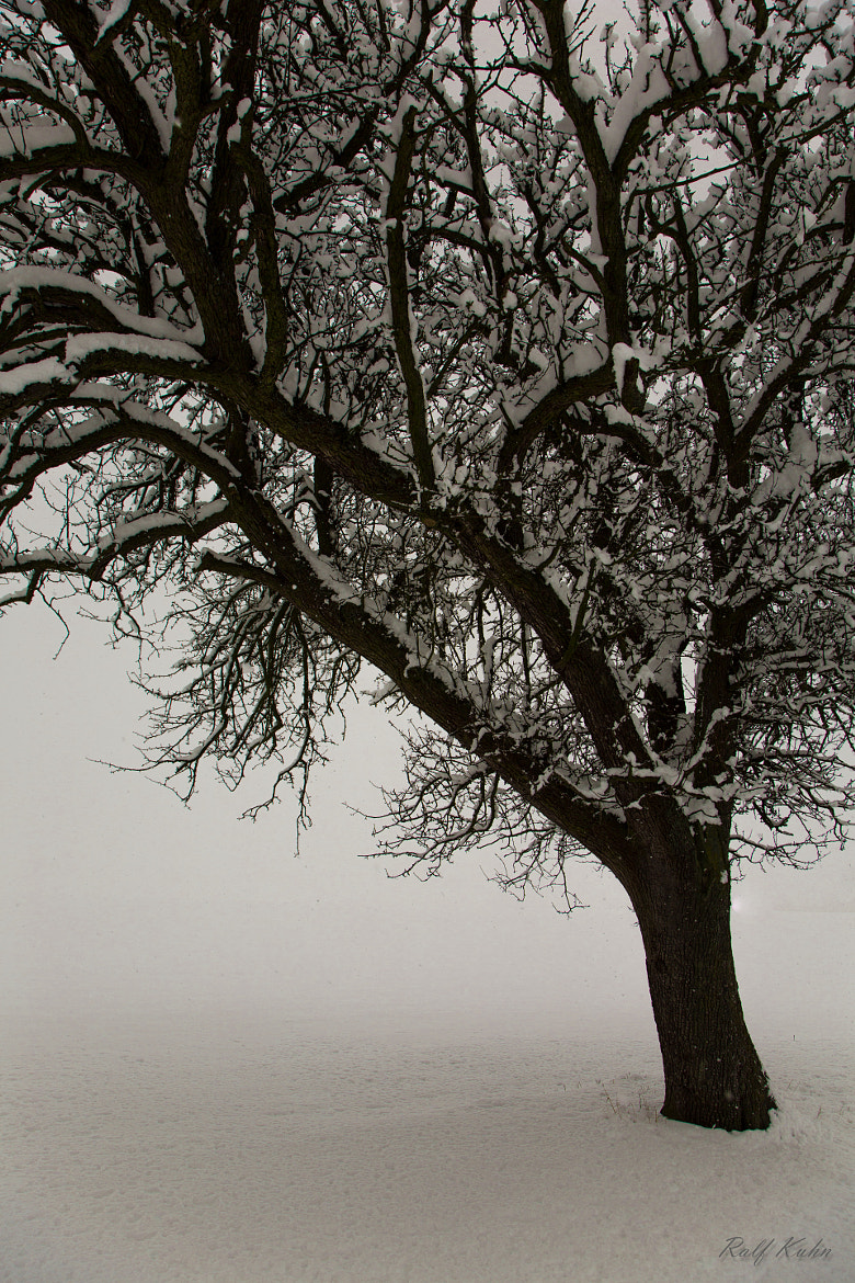Photograph the end of Winter by Ralf Kuhn on 500px