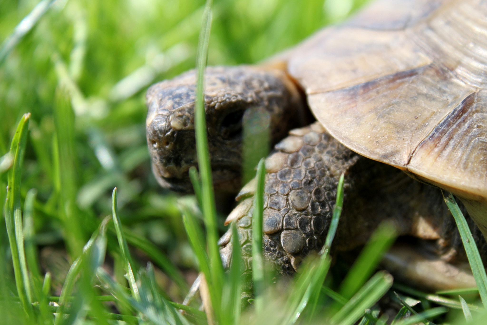 Photograph Turtle Zeus by Mary Faccheni on 500px