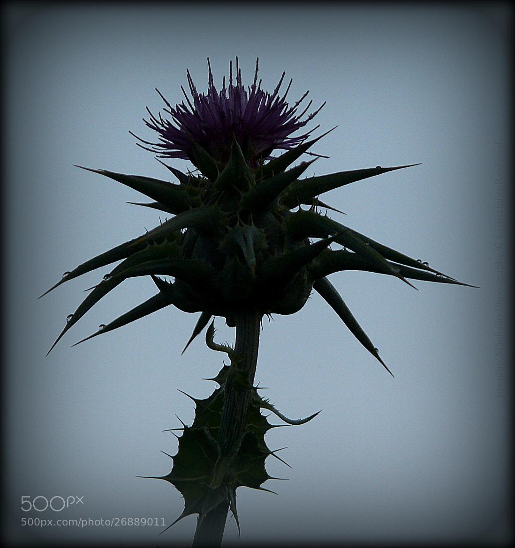 Photograph Love also has thorns by Joaquim Machado on 500px