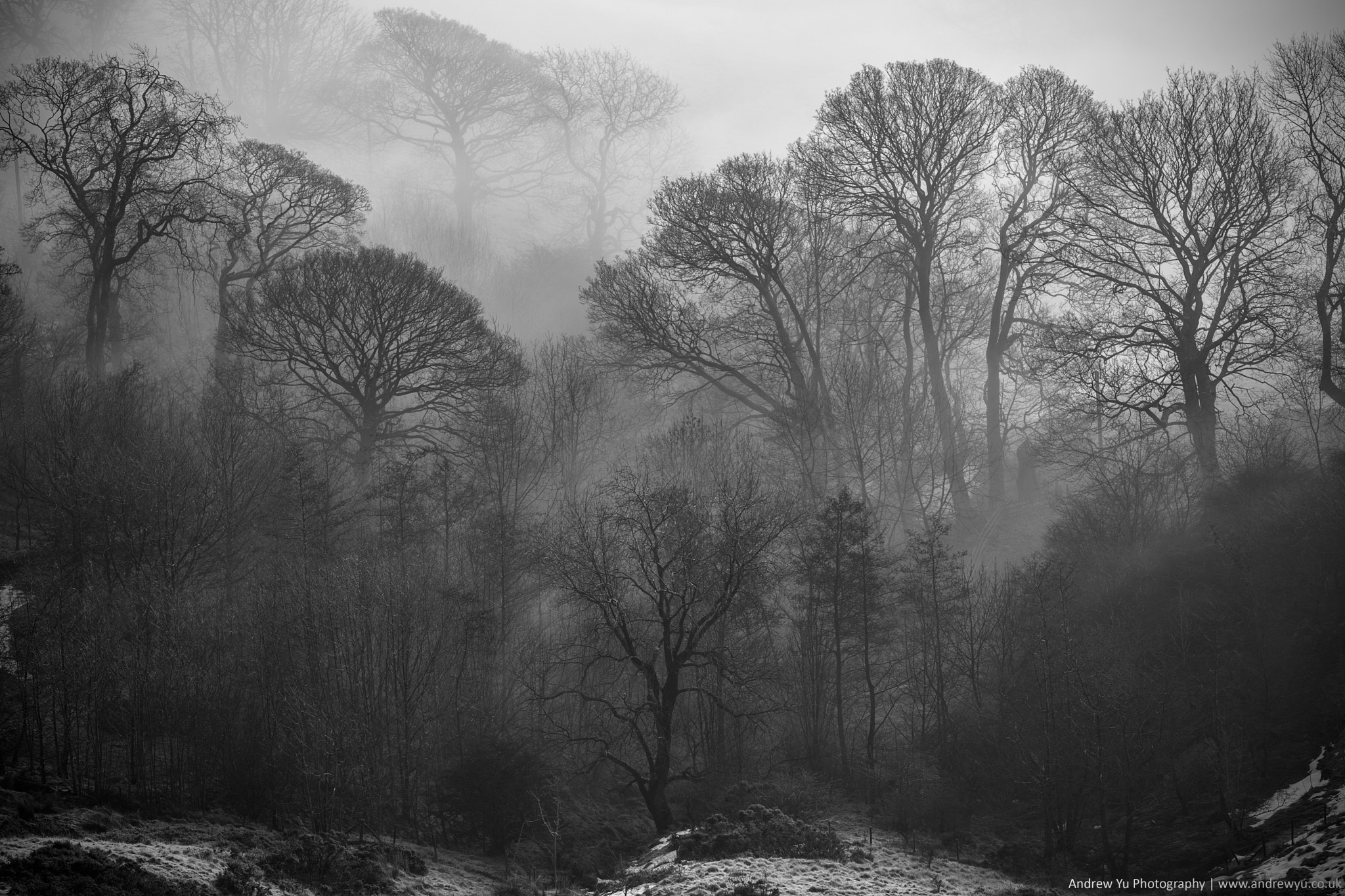 Photograph Misty Trees by Andrew Yu on 500px