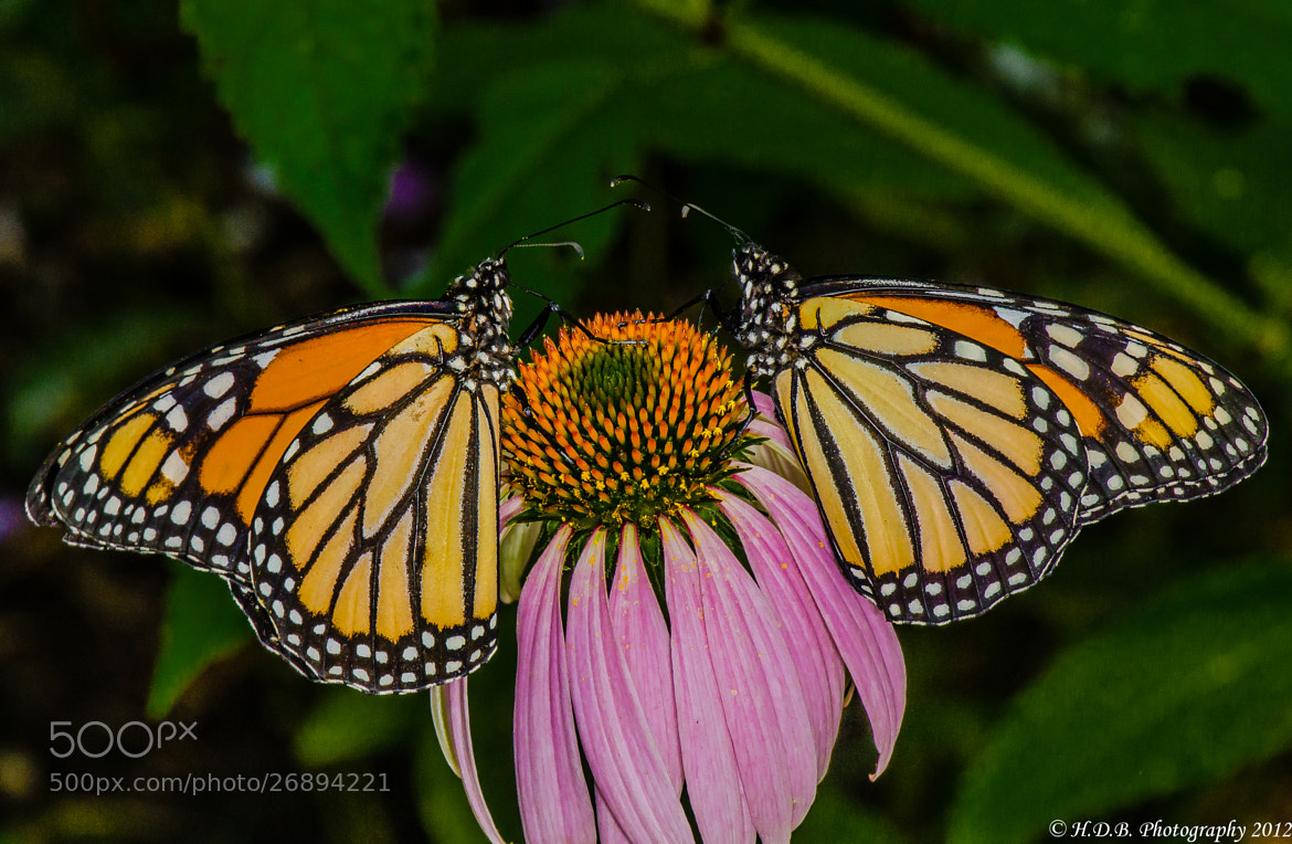 Photograph Two Of A Kind by Harold Begun on 500px
