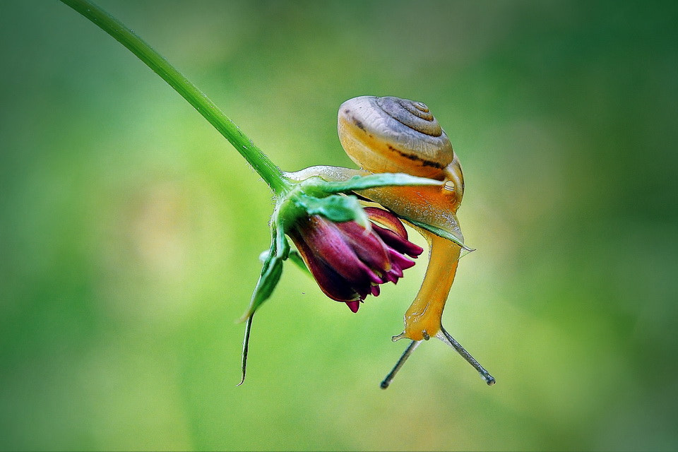 Photograph Snail by Agung Harsono Pirmo on 500px