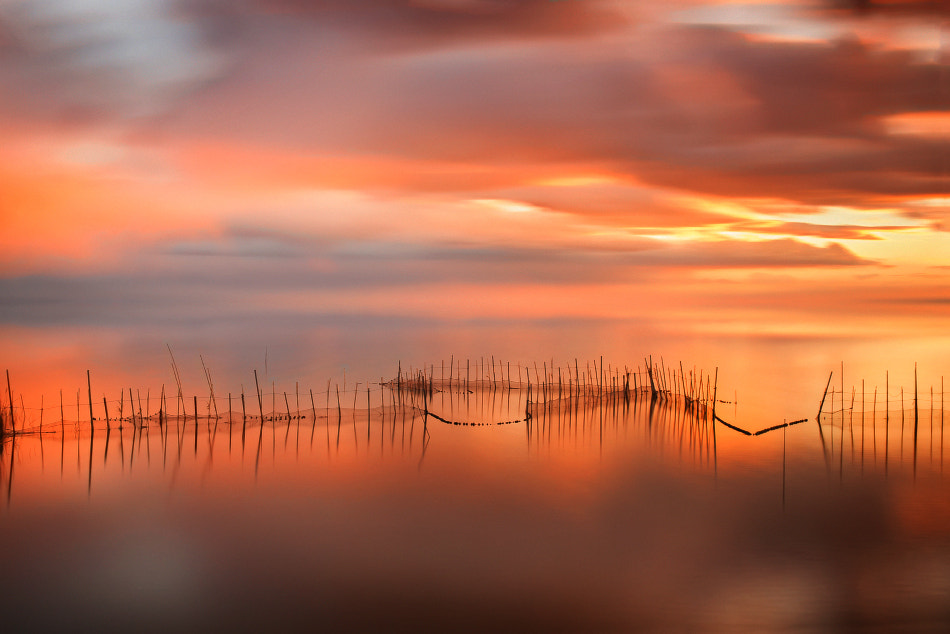 Photograph Nets II by Jose Beut on 500px