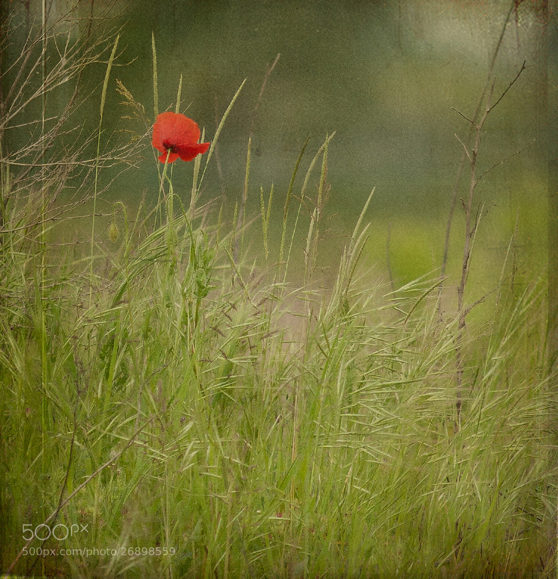 Photograph without you by Gemma Costa on 500px