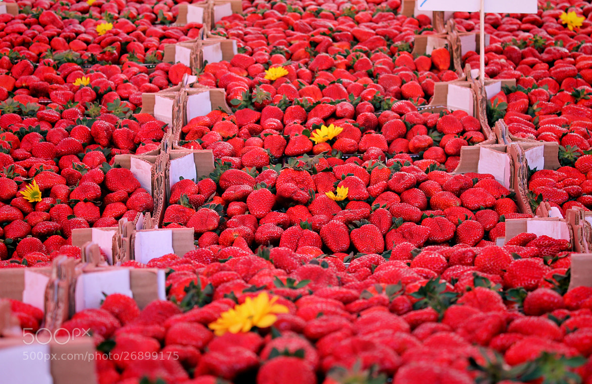 "Photograph Strawberry ""fileds"". by Everypeedees Mu on 500px"