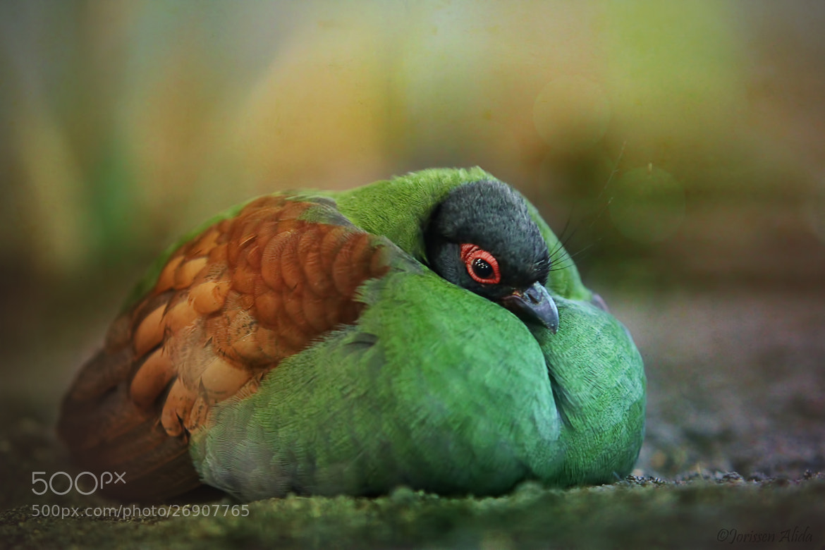 Photograph Puffy by Alida Jorissen on 500px