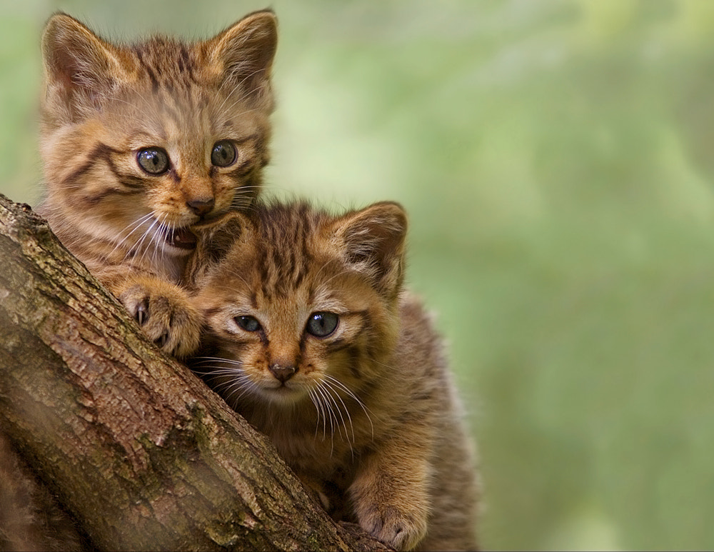 Photograph Cats by Stefano Ronchi on 500px