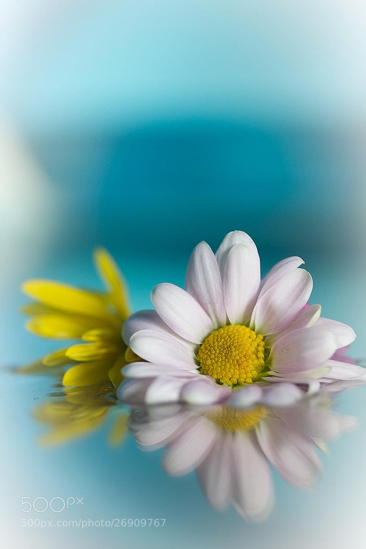 Photograph Floating flowers by Margrét Elfa Jónsdóttir on 500px